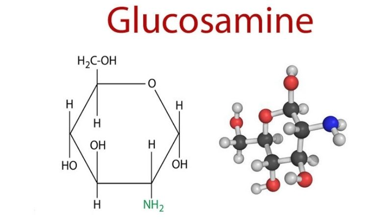 Tìm hiểu về Glucosamine