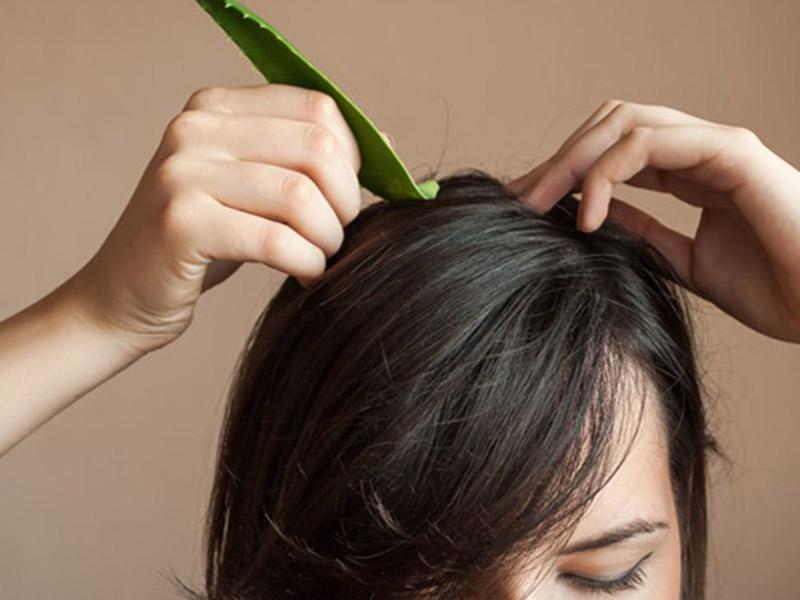 Ủ tóc bằng nha đam tươi