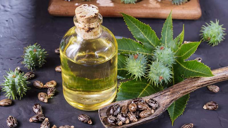 Thầu dầu là dầu thực vật rất tốt trong việc kích thích mọc tóc