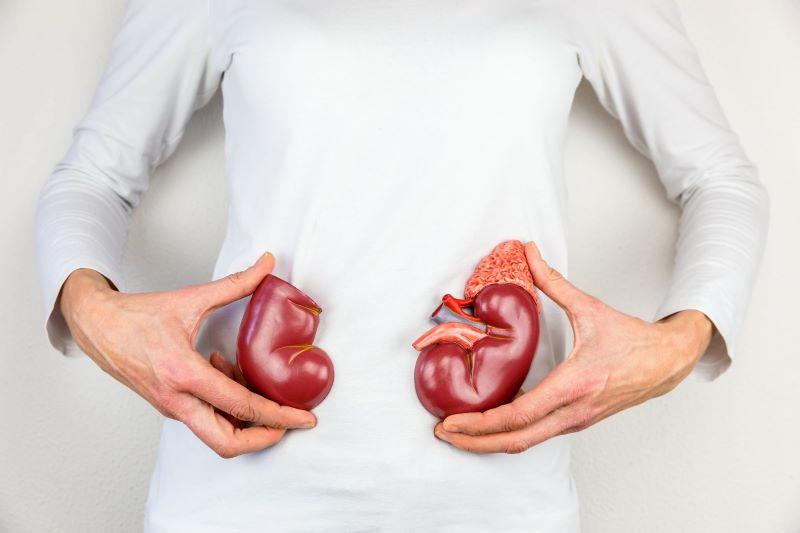 Các bệnh lý về thận nếu không khắc phục sớm có thể gây ra huyết áp cao