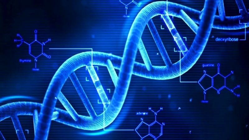 B9 tổng hợp DNA và cải thiện các vấn đề về nhận thức