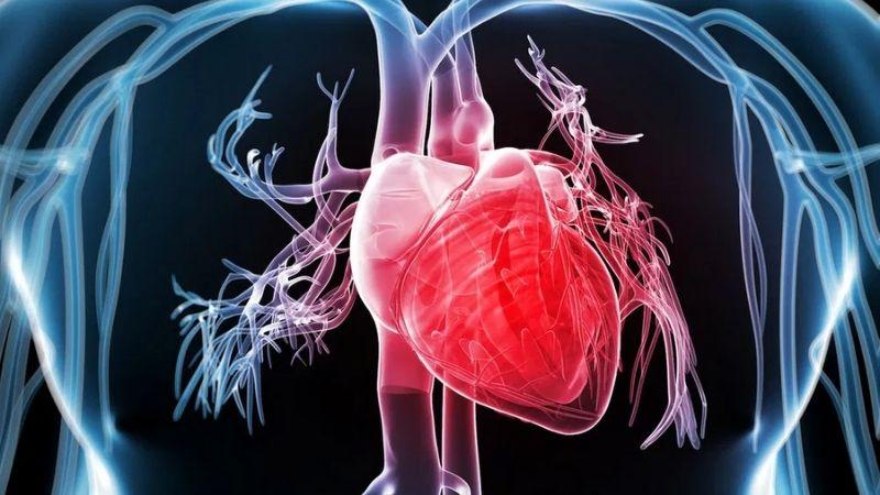 Ngăn ngừa nguy cơ mắc các bệnh về tim mạch