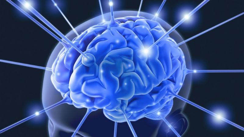 Hỗ trợ các hoạt động của não