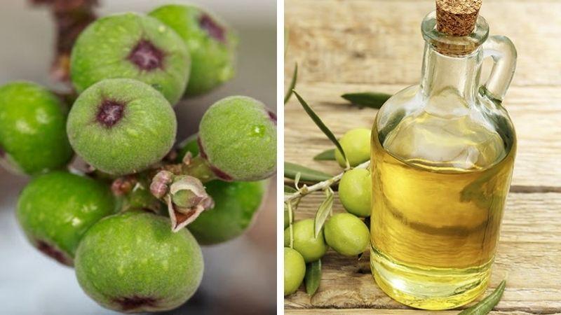 Người bệnh có thể kết hợp sung với dầu oliu