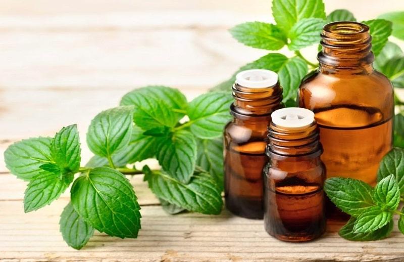 Tinh dầu bạc hà có mùi thơm dễ chịu sẽ giúp cơn đau đầu của bạn biến mất nhanh chóng