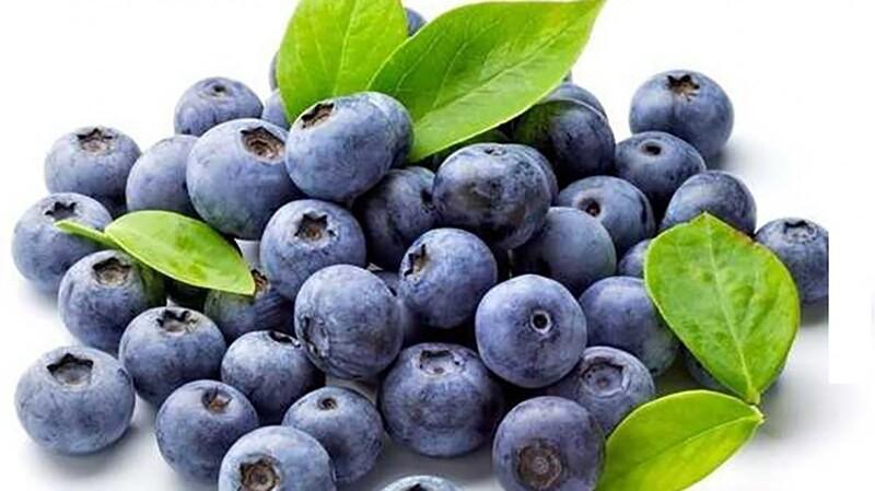Tinh chất từ quả việt quất có thể ngăn ngừa quá trình xơ vữa mạch máu, nuôi dưỡng mạch máu não.