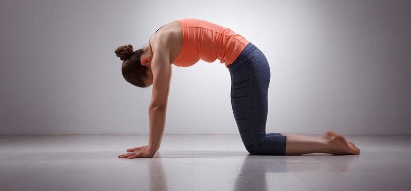 Tập yoga với tư thế con mèo