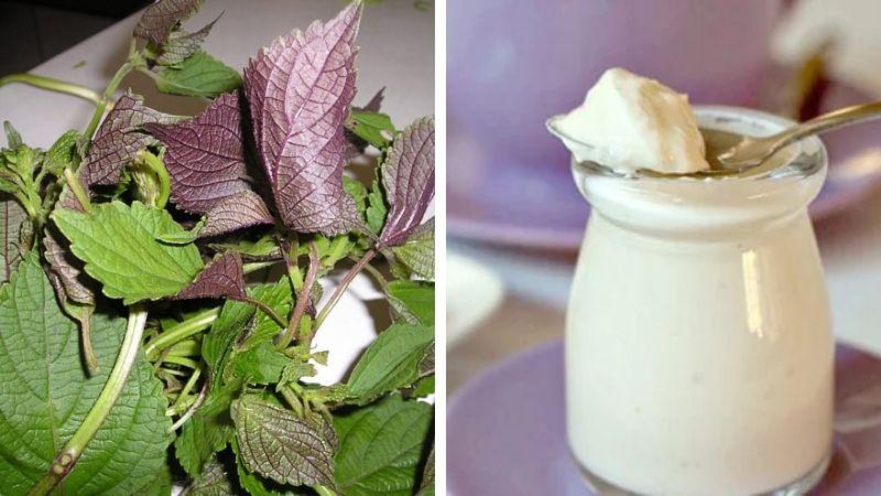 Bạn có thể trị mụn ẩn bằng lá tía tô và sữa chua