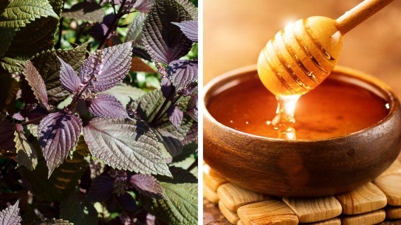 Dưỡng da bằng lá tía tô và mật ong