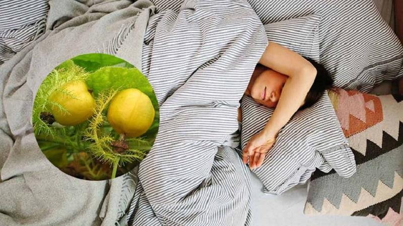 Cây lạc tiên chứa nhiều thành phần có tác dụng an thần, cải thiện giấc ngủ rất tốt