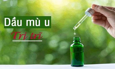 Sử dụng dầu mù u trị trĩ hiệu quả
