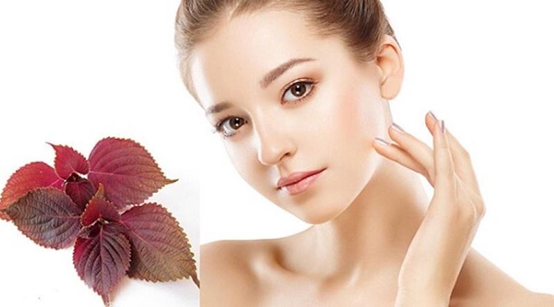 Rất nhiều người sử dụng lá tía tô để chăm sóc và làm đẹp da