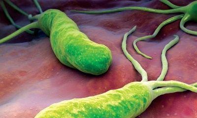 [Tìm hiểu ngay]: Vi khuẩn HP là gì? Có nguy hiểm không? Điều trị như thế nào?