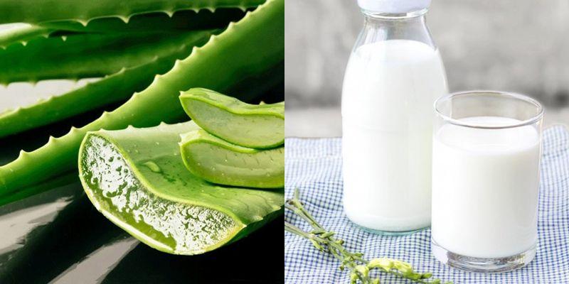 Cách làm trắng da bằng nha đam tại nhà với sữa tươi