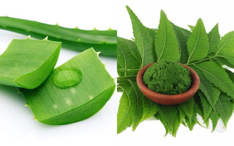 Làm trắng da mặt bằng nha đam và bột lá neem