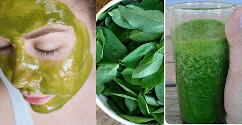 Cách chữa nám bằng rau ngót đơn giản nhất chính là sử dụng nước cốt nguyên bản