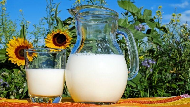 Uống sữa gì để giảm cân? Sữa tươi không đường